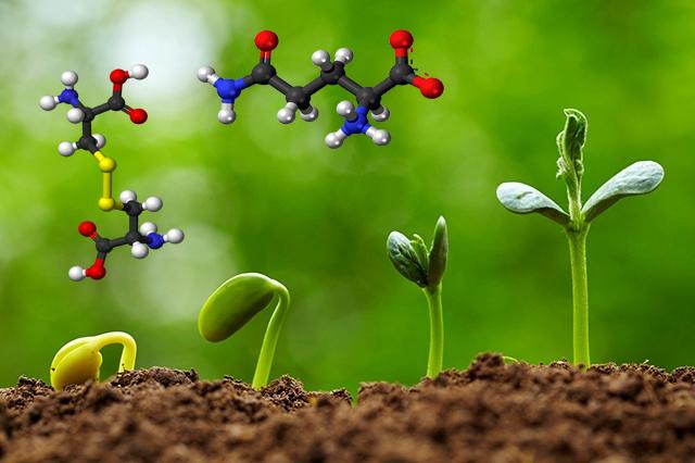 Амінокислоти для рослин. Навіщо рослинам потрібні амінокислоти?