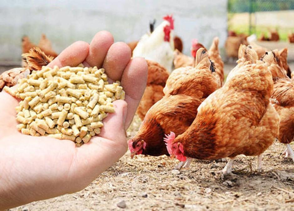 Амінокислоти в комбікормах. Амінокислоти для тварин та птиці