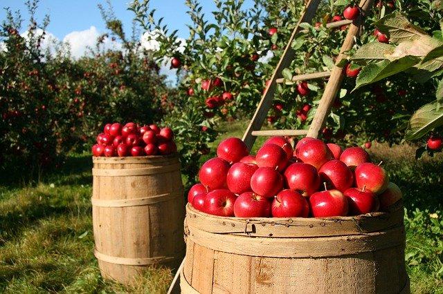 Особливості осіннього підживлення плодових дерев та ягідних культур