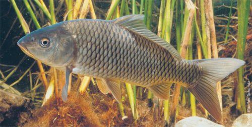 Заболевания рыб и их лечение. Предлагаем эффективные препараты