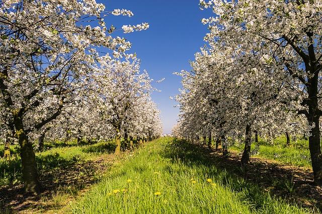 Минеральные удобрения для яблонь, груши