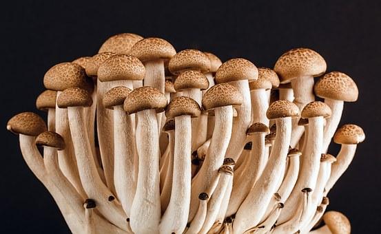Вирощування грибів