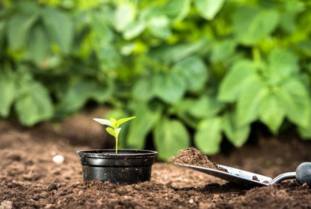 Борная кислота в качестве удобрения для растений: способы применения