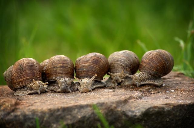 Як розводити равликів
