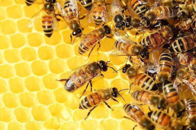 Хвороби бджіл та їх лікування
